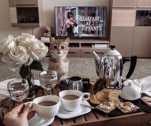 coffee, food, and animal image