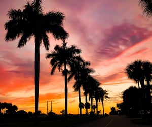 color, palms, and photography image