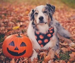dog, autumn, and Halloween image