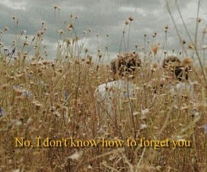 eden, field, and Lyrics image