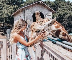 girl, giraffe, and animal image