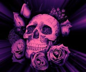 skull rose illustration image