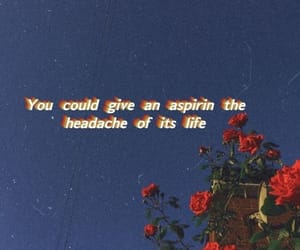 rose, quotes, and wallpaper image