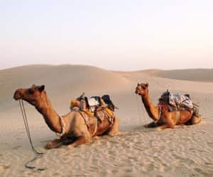 camel, desert, and nature image