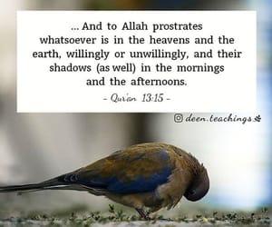 allah, islam, and lové image
