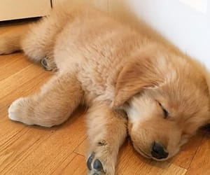 dogs, puppy, and sleep image