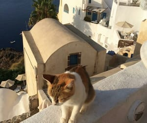 cat, Greece, and travel image