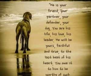 defender, his love, and your dog image