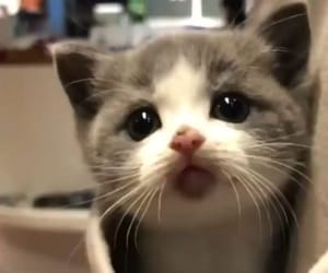 adorable, pet, and cat image