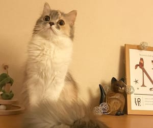 animals, cute, and cats image