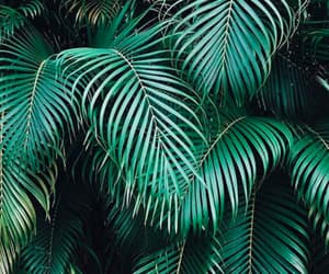 plants, summer, and tropical image
