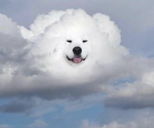 clouds, aesthetic, and dog image