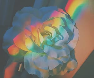 rainbow, flowers, and aesthetic image