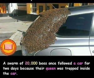 fact, bees, and car image