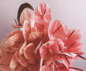 aesthetic, beautiful, and coral image