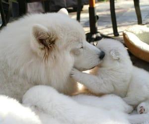 animals, dog, and sweet image