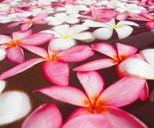flower, pink, and beutifull image