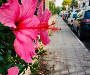 flowers, mallorca, and pink image