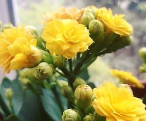 flowers, girl, and like image
