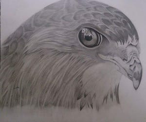 draw, eagle, and pencil image