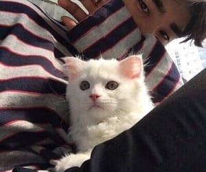 boy, cat, and ullzzang image