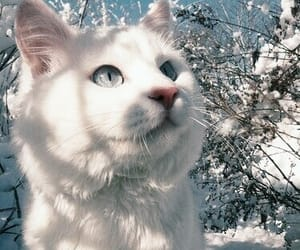 cat, animal, and snow image