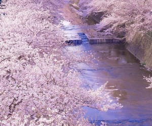 flower, japan, and spring image