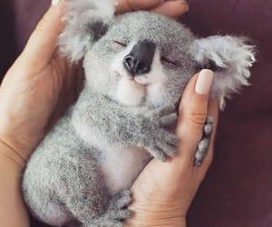 animal, Koala, and cute image