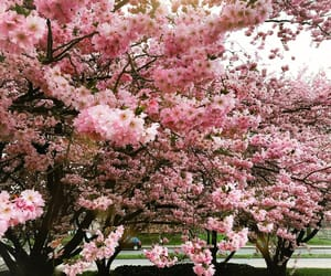 blumen, flowers, and pink image