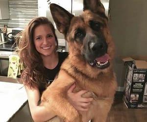animals, big, and cute image