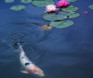 carp, cherry on top, and flowers image