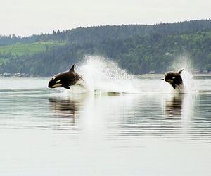 animal, beautiful, and water image
