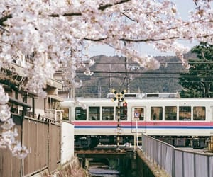 cherry blossom, japan, and spring image