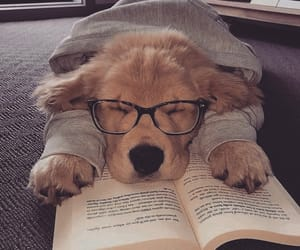 book, dog, and inspiration image