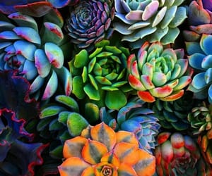 succulent, plants, and colorful image