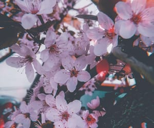cherry, flowers, and light image