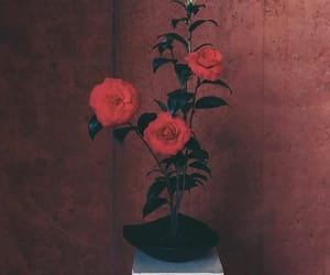 aesthetic, beauty, and flower image