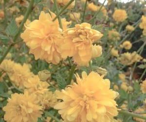 yellow aesthetic image