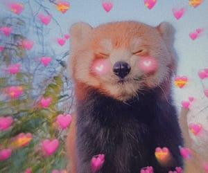 animal, edit, and hearts image