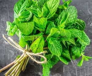 green, peppermint, and herb image