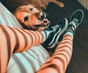 dog, vans, and animal image