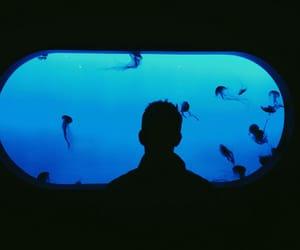 blue, jellyfish, and aquarium image