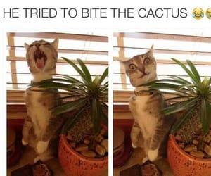 cactus, lol, and cat image