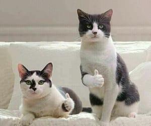 Animales, Gatos, and risas image