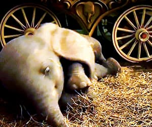 adorable, gif, and baby elephant image