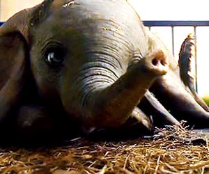 adorable, baby elephant, and sweet image