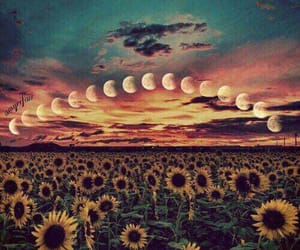 moon, sunflower, and sky image