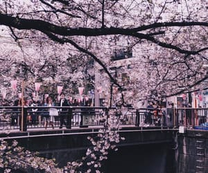 beautiful, cherryblossom, and city image