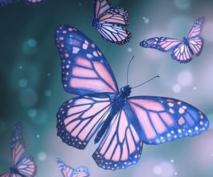 butterfly, animal, and background image