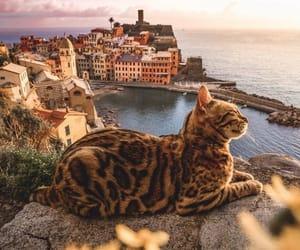 animal, cat, and sea image